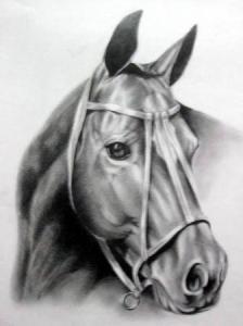 Dibujos a lapiz de caballos (7)