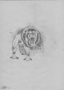 Dibujos a lápiz de leones (7)