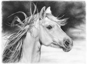 Dibujos de animales a lápiz (2)