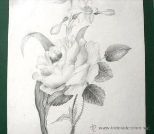 Dibujos a lápiz de flores (10)