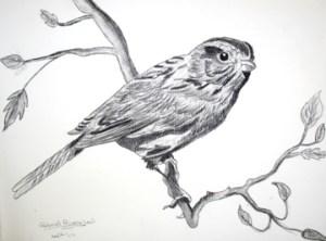 15 dibujos a lápiz avanzados (4)