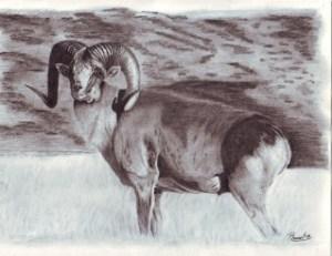 Dibujos en lápiz y carbonilla (6)