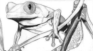 10 Hermosos dibujos a lápiz de animales (7)