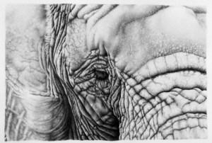 13 Sorprendentes dibujos a lápiz hiperrealistas (14)
