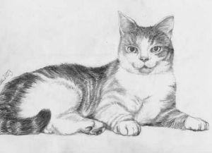 9 Bonitos dibujos a lápiz gatos (6)