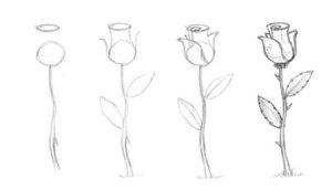 11 Nuevos dibujos a lápiz de rosas (12)