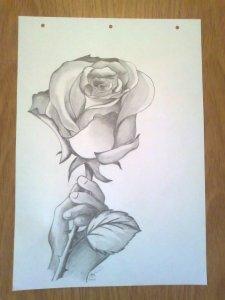 11 Nuevos dibujos a lápiz de rosas (2)