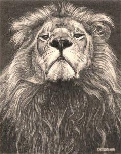 10 nuevos dibujos a lápiz de animales (5)