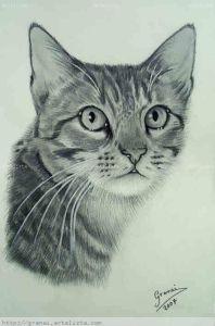 10 nuevos dibujos a lápiz de animales (8)