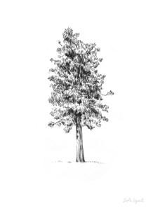 11 Nuevos dibujos a lápiz de árboles (1)