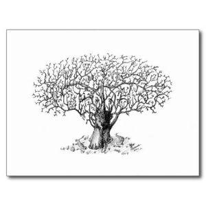 11 Nuevos dibujos a lápiz de árboles (11)