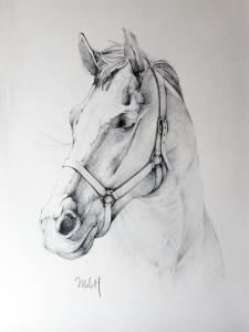 11 dibujos a lápiz de caballos (6)