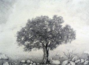 11 dibujos a lapiz de árboles (9)