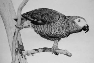 10 dibujos a lapiz de animales (2)