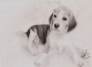 10 dibujos a lapiz de animales (6)