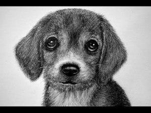 10 dibujos a lapiz de animales (9)