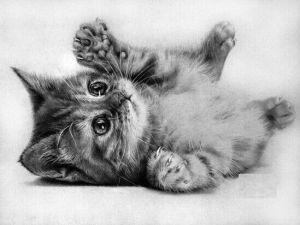 10 dibujos a lápiz de gatos (1)