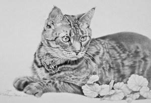 10 dibujos a lápiz de gatos (4)