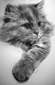 10 dibujos a lápiz de gatos (6)