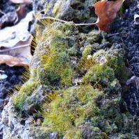 easter smelt 45 © www.dieblauenstunden.com