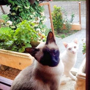 Gatos pose