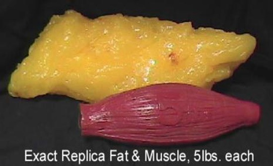 5 Pounds of Body Fat vs. 5 Pounds of Muscle
