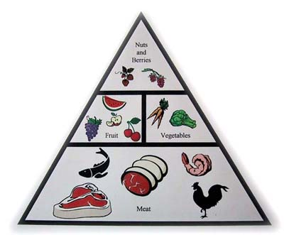 pyramid News Flash! Caveman Diet Good...Your Diet Bad