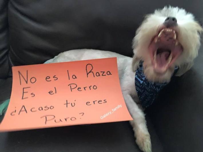 16 Mensajes que tu perro tiene para ti