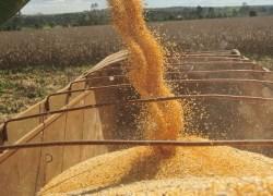 MPF pede cumprimento de limite legal para plantio de soja transgênica próximo à unidade de conservação