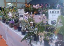 17ª Exposição de Orquídeas ocorre no final de semana em Bento