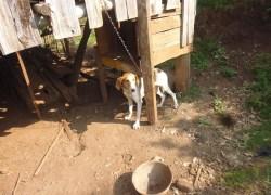 Cães abandonados no Conceição em Bento