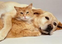 Prefeito Pasin sanciona lei para esterilização de cães e gatos