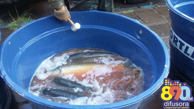 feira do peixe2
