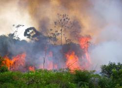 Trabalho da UCS sobre consequências de queimadas controladas fundamenta decisão do STF