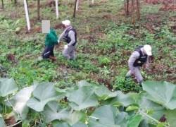 Brigada Militar prende jovem por assalto em farmácia no Progresso em Bento