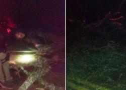 Duas pessoas ficam feridas após colisão de veículo em árvores na BR-470