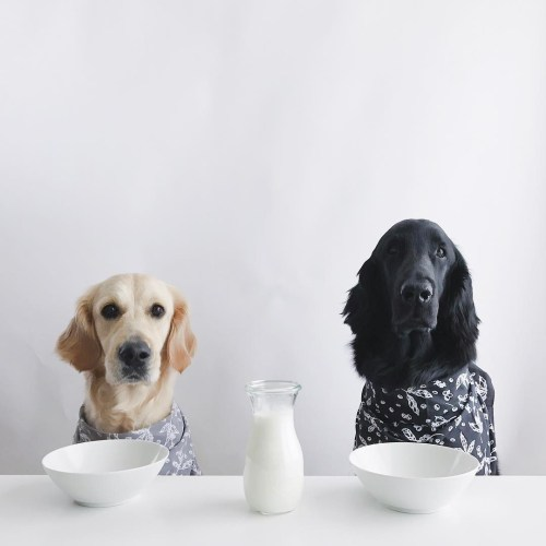 Medium Of Ibs In Dogs