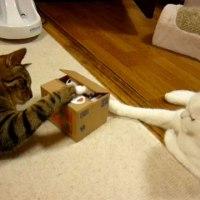 本物の猫も夢中になる面白さ! 猫がこっそりお金を隠してしまう貯金箱『いたずらBANK』
