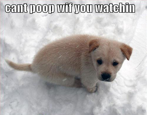 dog poop in snow
