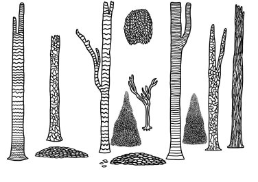 Sketch of the Trees