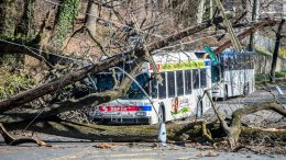 A bus is covered by a tree that collapsed onto power lines due to a storm last Friday in Bryan Mawr, Pa., Sunday, March 4, 2018. The road is closed until crews can clean the mess. (AP)