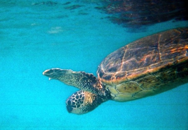 Volunteer with Costa Rica Sea Turtles