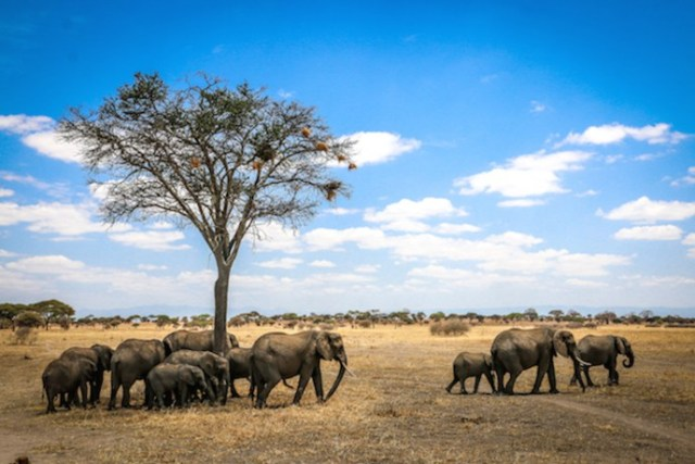 Top 10 National Parks- Tarangire National Park