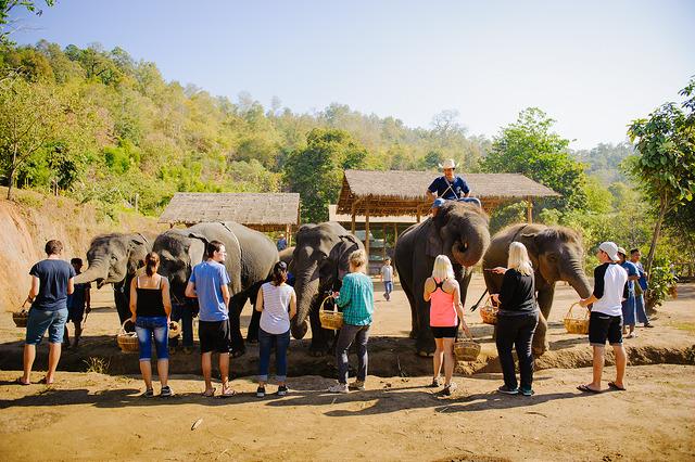 group-travel-elephants