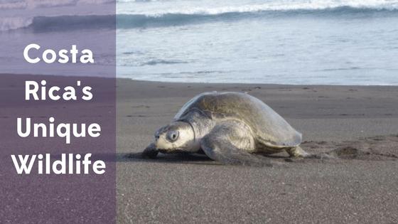 Costa Rica's Unique Wildlife