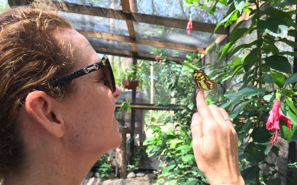 butterfly on finger of a tourist in belize ecotour