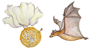 Bat Illustrated