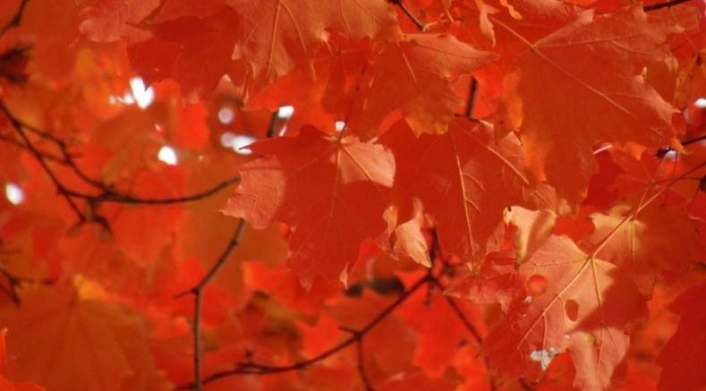 Top 10 Places for Fall Colors in Wisconsin