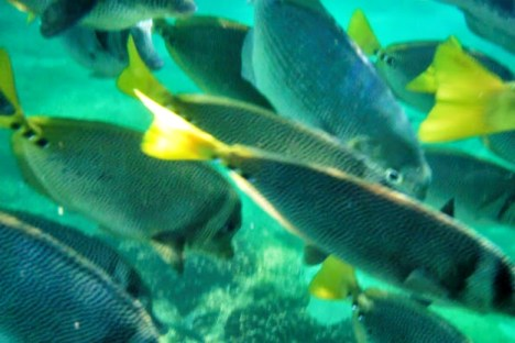 Colorful fish in the Santa Maria Bay