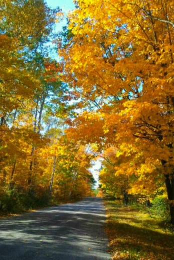 Fall colors on Washington Island, Door County